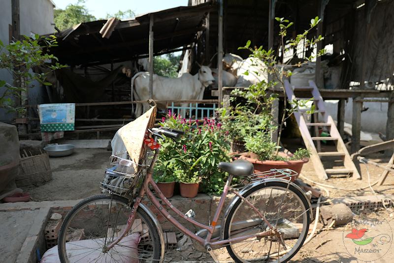 Village Life 2